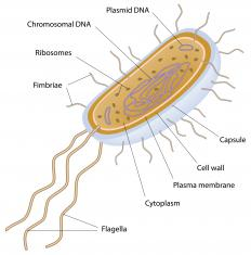 Singled-celled archaea are prokaryotes.