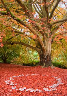 "In literature, the phrase, ""crunching through the autumn leaves,"" is an example of auditory imagery."