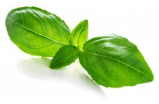 Basil is a common ingredient in bruschetta pasta.