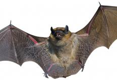 Small mammals like bats are common forest species.