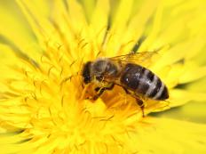 Plants can eject pollen in milliseconds when they detect that a pollinating insect has landed.