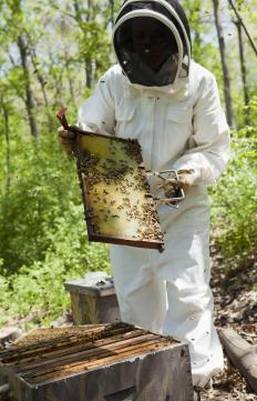 A beekeeper's bees provide externalized benefits to communities.
