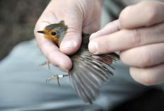 A wildlife biologist may study how an animal interacts with its environment.