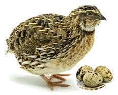 Egg-eater snakes require the presence of birds where they live, as they only eat eggs.