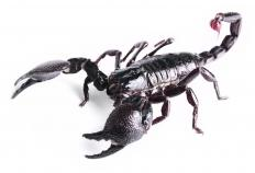 Scorpions come in a range of colors, from black to beige.