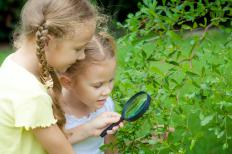 Waldorf education emphasizes a respect for nature.
