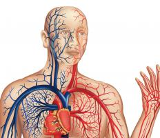Septicemia compromises a person's entire vascular system, shown here in red and blue.