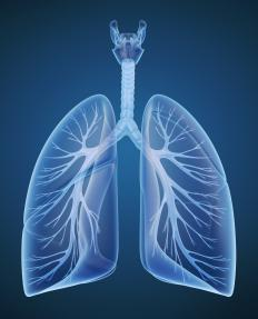 A doctor treating a hypoxia or hypoxemia patient may need to run tests to learn more about the patient's lung function and check for obstructions that might be restricting blood flow.