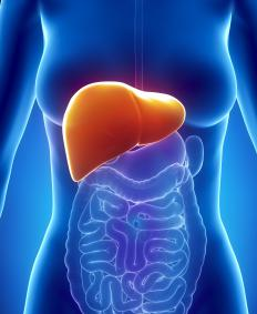 The human liver is one organ that can have a section harvested from a living person.