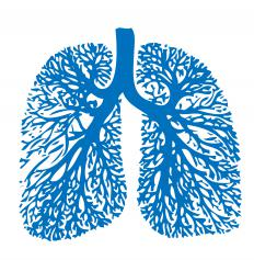 Peribronchial cuffing occurs when the bronchial passages of the lungs thicken with mucus.