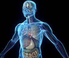 The total weight of organs, muscles, and bones in the body is referred to as lean body weight.
