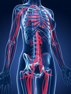 Healthy circulation throughout the body is key in maintaining a healthy heart.