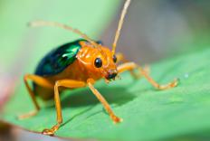Beetles have modified exoskeletons.