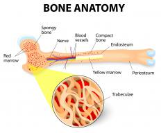 Distraction osteogenesis is a procedure in which a bone, or series of bones, is lengthened.