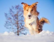 Dogs have shown fast mapping abilities.