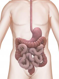 Gut flora are the microorganisms that reside throughout the digestive tract.
