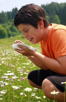 Montelukast and levocetrizine may both be suitable for treating pollen allergies.