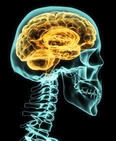 A vegetative state may occur after an individual has suffered brain damage.