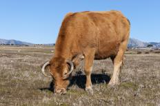 Warm season grasses are often used on livestock grazing lands.