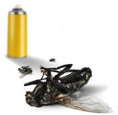 Flies can be killed by bug sprays, but many people do not like using toxic chemicals in their homes.