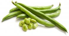Hericot verts -- the true French green bean -- are similar to green beans eaten in the the U.S., but they are longer and slenderer.