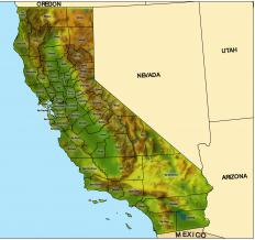 The California toad is native to the northern part of Baja, California.