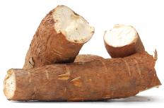 Most varieties of cassava root have a toxin that protects the root from invasion.