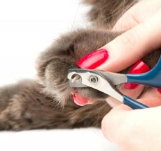 Grooming a cat includes regular nail clipping.