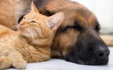 The Best Friends Animal Society supports no-kill animal shelters.
