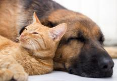 It may be useful to send a letter to a neighbor requesting that he or she clean up after pets.