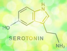 Fenfluramine releases an elevated amount of serotonin into a person's system and suppresses the appetite of the user.