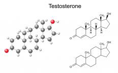 Some types of glutathione S-transferase can also be involved in the biosynthesis of testosterone.