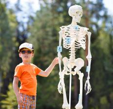 Young children have mostly spongy bone that transforms into compact bone as they mature.