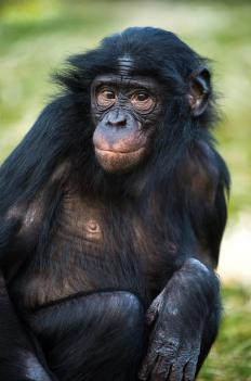 Chimp testing has shown that neural tissue repair can be done with stem cells.