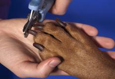 Dog groomers keep a dog's nails trimmed.