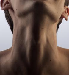 The external carotid artery splits off the common carotid artery near the top of the Adam's apple.