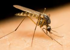 Mosquito bites can lead to the infection of West Nile encephalitis, Western equine encephalitis, Eastern equine encephalitis, St. Louis encephalitis, La Crosse encephalitis and Japanese encephalitis.