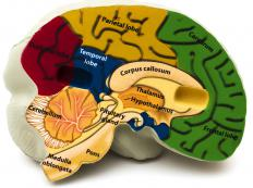 The cerebellum affects a person's procedural memory.
