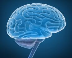 A BCI links a human brain directly to a computer.