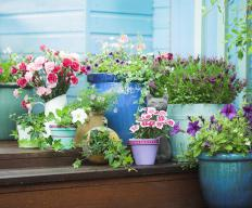 Flowers can be grown on a deck in a variety of containers.