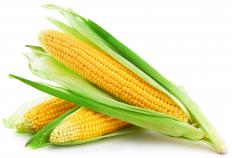 Maize flour is derived from the kernels found within a husk.