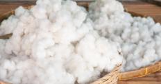 Cotton balls may be used with spit shine.
