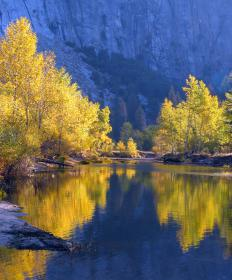 Most cottonwoods are found in riparian zones near rivers, lakes, or other fresh water sources.