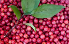 Crabapples are a deciduous tree.