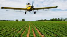Microbial insecticides can be sprayed on fields by crop dusters.