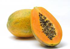 A papaya, which can be used for enzyme therapy.