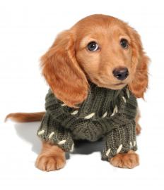 Sweaters help keep little dogs warm in cold weather.