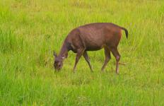 Vegetation provides food for wildlife.