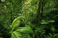 Tropical rainforests lie around the equator.