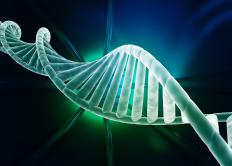 DNA has a double helix structure.